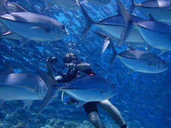 scuba diving tesco gift experience