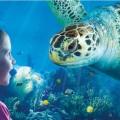 Should you convert Tesco Clubcard points into Sea Life London Aquarium tickets?