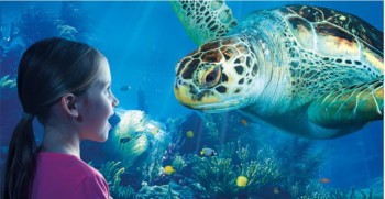tesco clubcard deals london aquarium